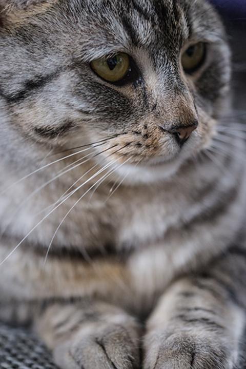 Savas Turanci Photography-Katze